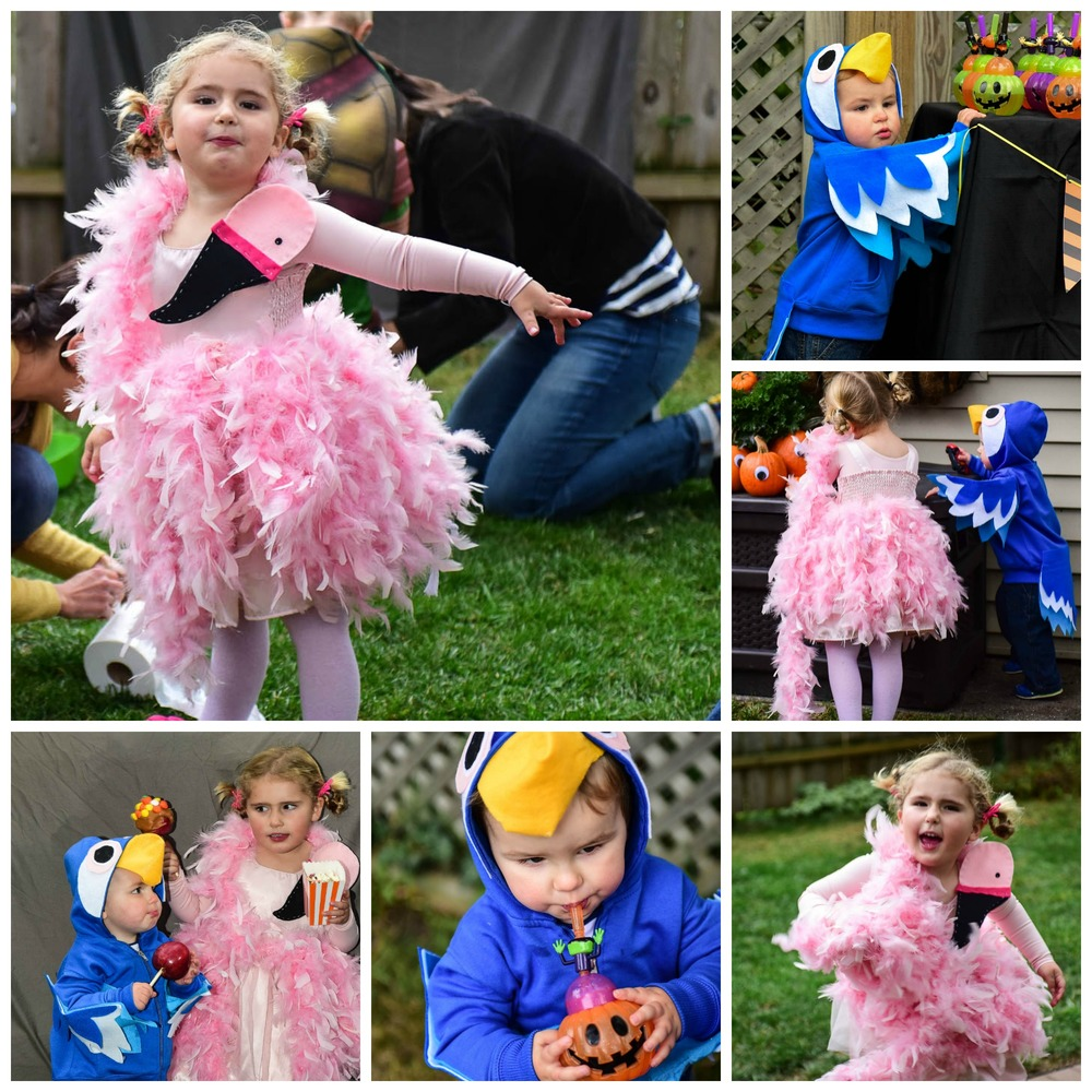 Feathered friends easy diy flamingo and parrot halloween feathered friends easy diy flamingo and parrot halloween homemakers habitat solutioingenieria Gallery